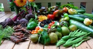 Cote_Jardin_Jardinerie_en_ligne-Graines_de_Legumes
